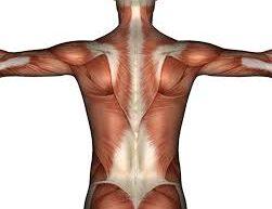 Tečaj anatomije mojStil