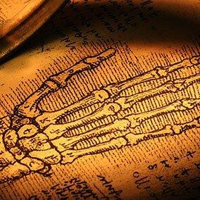 tečaj anatomije